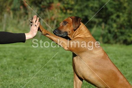 协议 动物 遥控器 通信 社区 合作 狗 友谊 手 人类 爱 伙伴关系